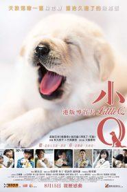 Xiao Q / Little Q